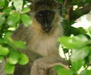 Barbados Nature Tour