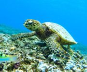Swim with Turtles in Barbados
