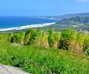 Treasures of Barbados Island Tour
